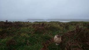 Misty with mushroom